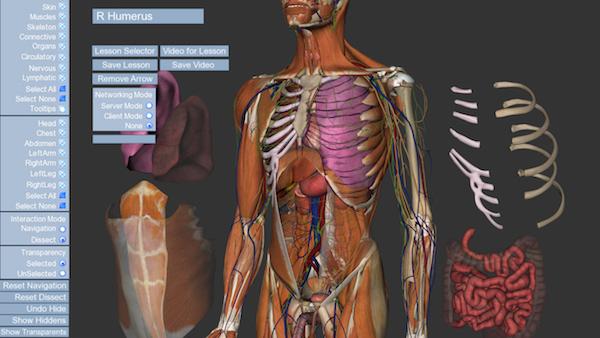 Анатомический курс, сделанный в программном обеспечении WorldViz